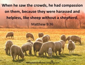 Matthew 9 36.jpg