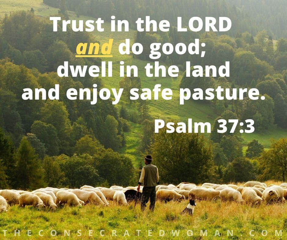 Psalm 37 3.jpg