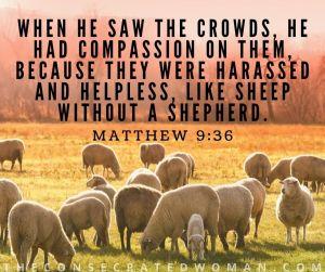 Matthew 9 36